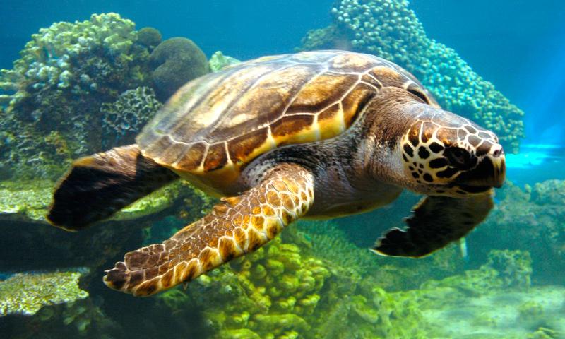 Alejandro Gottlieb: ¿Por qué los humanos debemos proteger a las tortugas?