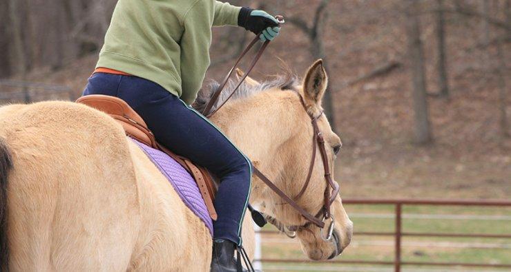 Sebastián Felipe Rodríguez Robles: La equitación y sus beneficios